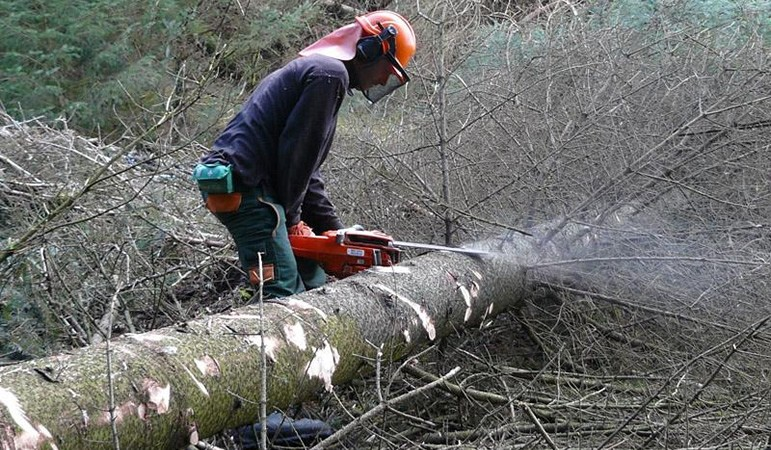 tree-cutting
